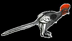 English: Illustration of the basal troodontid ...