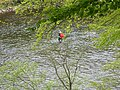 Angler in the Tay - geograph.org.uk - 424666.jpg