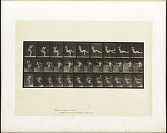 Animal locomotion. Plate 247 (Boston Public Library).jpg