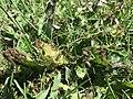 Ants20190804.jpg