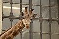 Antwerp zoo, Belgium (1425419099).jpg