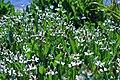 Aquatic plants Shoreline Park Mountain View California IMG 2741.jpg