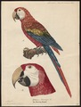 Ara macao - 1842-1855 - Print - Iconographia Zoologica - Special Collections University of Amsterdam - UBA01 IZ18500085.tif