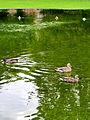 Arboretum - 'Land unter' nach Gewittersturm 2012-07-03 17-39-24 (P7000).JPG