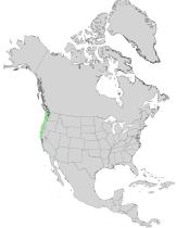 Arbutus menziesii USGS range map.png
