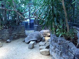 Natura Artis Magistra - Image: Artis turtles Photo by Persian Dutch Network 2006