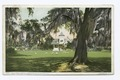 Ashley Hall, Magnolia on the Ashley, Charleston, S.C (NYPL b12647398-69555).tiff