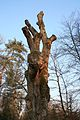 Ausgeschnitzte Eule auf dem Baum.jpg