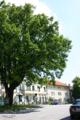 Austria Emperor Oak Tree 11.06.2006 Claus Rebler www.zunami.at.png