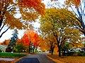 Autumn Colors in Madison - panoramio (11).jpg