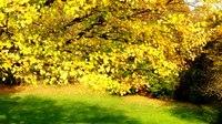 File:Autumn Leaf Colors in Europe.webm