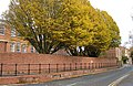 Autumn foliage along Swilgate Road. - geograph.org.uk - 1036964.jpg