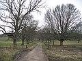 Avenue, Riddell - geograph.org.uk - 929726.jpg