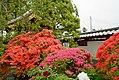 Azaleas in front of Onrinji temple gate.jpg