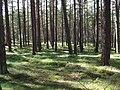 Bäume in Mechtersen.jpg