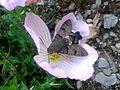 BG-Ranzanico-farfalla-2016-c.jpg