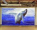 BH Humpback whale.jpg