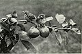 Baby birds at home (1912) (14728439156).jpg