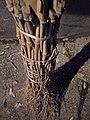 Balais en bambou - DIY - bamboo brooms - Alain Van den Hende - licence CC40 - SAM 3924.jpg