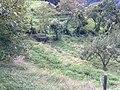 Barga, Province of Lucca, Italy - panoramio - jim walton (55).jpg