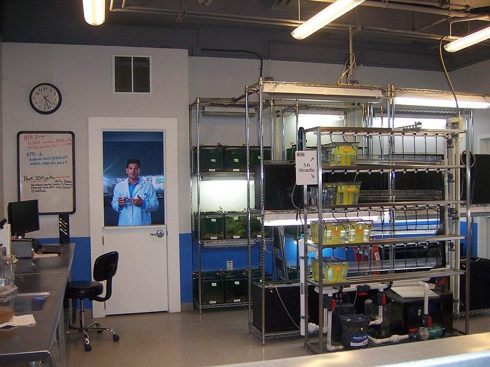 Barrens Top-Minnnow Lab