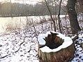 Baumstumpf beim Teltowkanal (Tree Stump by the Teltow Canal) - geo.hlipp.de - 32138.jpg