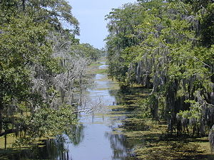 Jean Lafitte National Historical Park and Preserve - Kenta Canal at Barataria Preserve, Louisiana