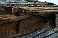 Beach closeups Barns Ness, 2014 (15264790888).jpg