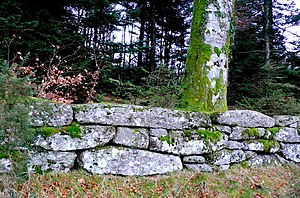 Spitchwick - Dry-stone wall near Spitchwick made from massive blocks of granite of the type described by Swete as built by Dunning