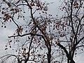 Beijing (November 2016) - 126.jpg