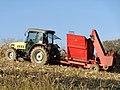 Berač kukuruza u polju.jpg