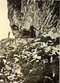 Bergens Museums aarbok (1920) (20178425429).jpg