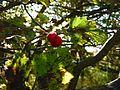 Berries (2936595792).jpg