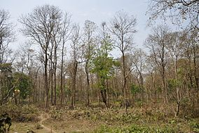 Bethuadahari Wildlife Sanctuary - Indian National Highway 34 - Nadia 2013-03-23 7084.JPG