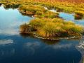 Bielawskie Błota. Zanikające jeziorko.jpg