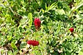 Bienenwiese Obermenzing - bee meadow 01.jpg