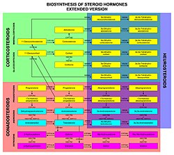Biosinthesis of steroid hormones (extended version).jpg