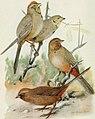 Bird-lore (1912) (14732714646).jpg