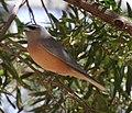 Bird 1 (30760410262).jpg