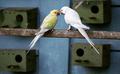 Birds0.png