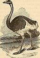 Birds and their ways; (1883) (14565120389).jpg