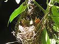 Birds in Bonito.jpg