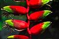 Birds of Paradise (25129819577).jpg