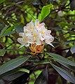 Blooming (9249202913).jpg