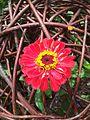 Blume in Weidenkugel.JPG