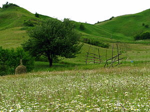 Mountain meadows in the vicinity of Bocicoel i...