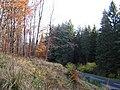 Boreland Forest - geograph.org.uk - 281277.jpg