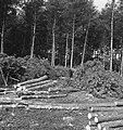 Bosbewerking, arbeiders, boomstammen, Bestanddeelnr 253-5934.jpg