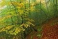 Bosque-otoño-ftntr.jpg