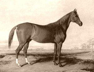 Boston (horse) - Image: Boston (USA)